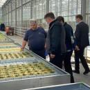 Резидент ТОСЭР «Череповец» - тепличный комплекс «Новый» - завершает монтаж томатного отделения площадью 4 гектара