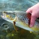 В Костомукше при поддержке Северстали откроют рекреационную рыбалку и обустроят гриль-беседки
